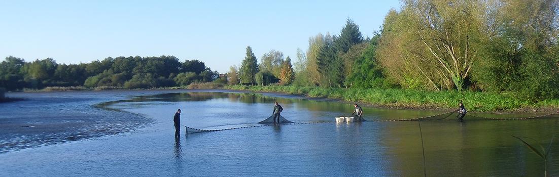 Pêche d'étang à la senne
